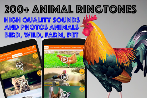 animals ringtones : alarm clock screenshot 1