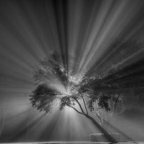 Through the Fog by Brent Sharp - Black & White Flowers & Plants ( foggy, black and white, fog, light trails, shadows, oak tree,  )