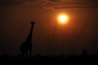 Photo: sunset of africa