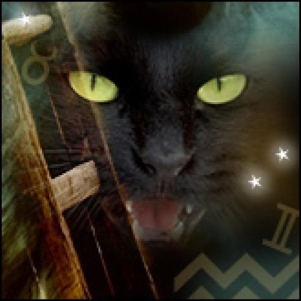 Others believe black cats are witches familiars (beings that aid witches in performing their...
