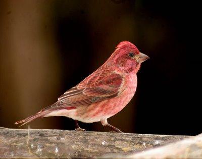 Ten Most Beautiful Species Of Birds In Tennessee
