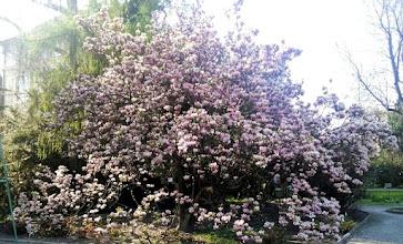 Photo: F4233505 w Ogrodzie Botanicznym