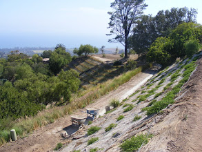 Photo: A large project planted in the Santa Barbara foothills in February, 2008