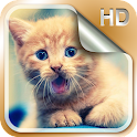 Kittens Live Wallpapers HD icon