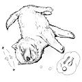Dizzy Doge