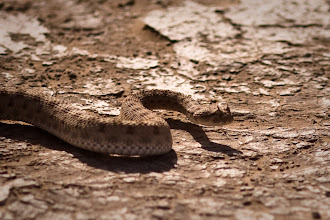 Photo: SERPIENTE
