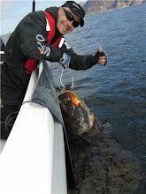 Photo: Fin hälle ca 5 min från Tromsö Fiskecamp http://norgehavsfiske.se/tromso_fiskecamp