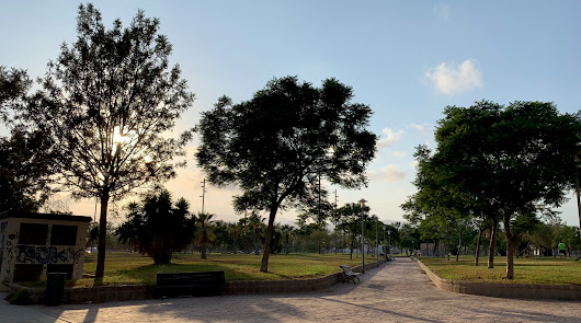 Hacia una ciudad verde y sostenible