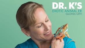 Dr. K's Exotic Animal ER: Gloves Off! thumbnail