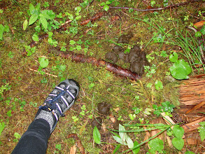 Photo: Fresh bear poo right next to my tent on Blake Island.
