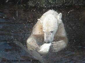 Photo: ... und gleich darauf spielt Knut im Wasser weiter :-)