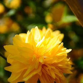 by Simona Călin - Flowers Single Flower