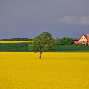 Yellow sea by Bogdan Cristian - Landscapes Prairies, Meadows & Fields ( yellow )