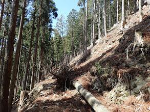 次第に林道は荒れて