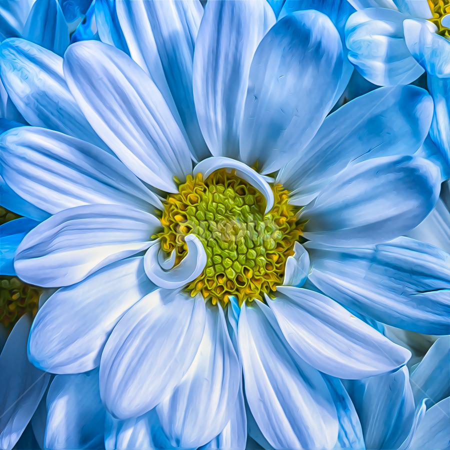 Baby Blue Petals by Bill Tiepelman - Nature Up Close Flowers - 2011-2013 ( blue daisy, macro, nature, petals, blue flower, soft flower, closeup,  )