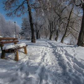 by Jasminka  Tomasevic - City,  Street & Park  City Parks