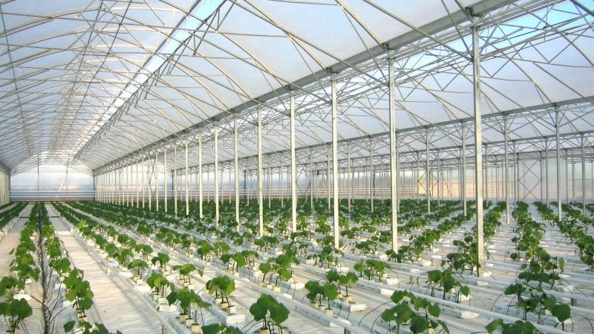 Rusia abre un nuevo complejo de invernaderos de alta tecnología | La Voz de  Almería