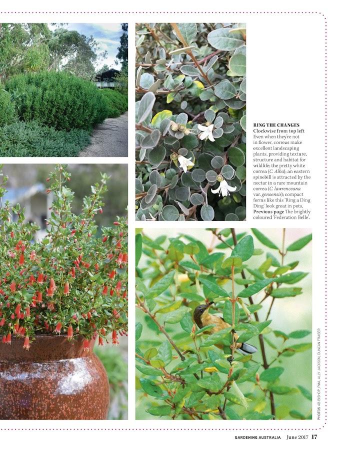 Gardening Australia- screenshot