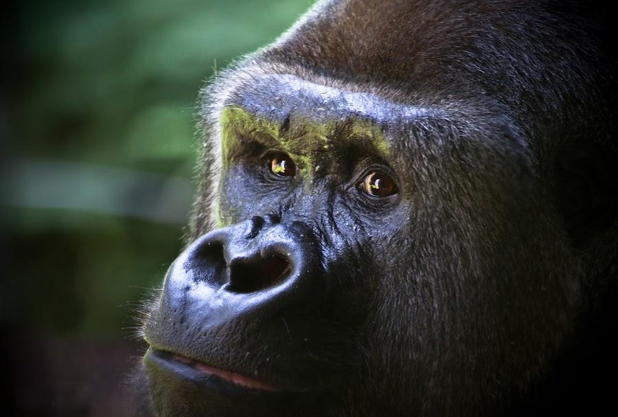 Got My Eye On You by Tim Denny - Animals Other Mammals