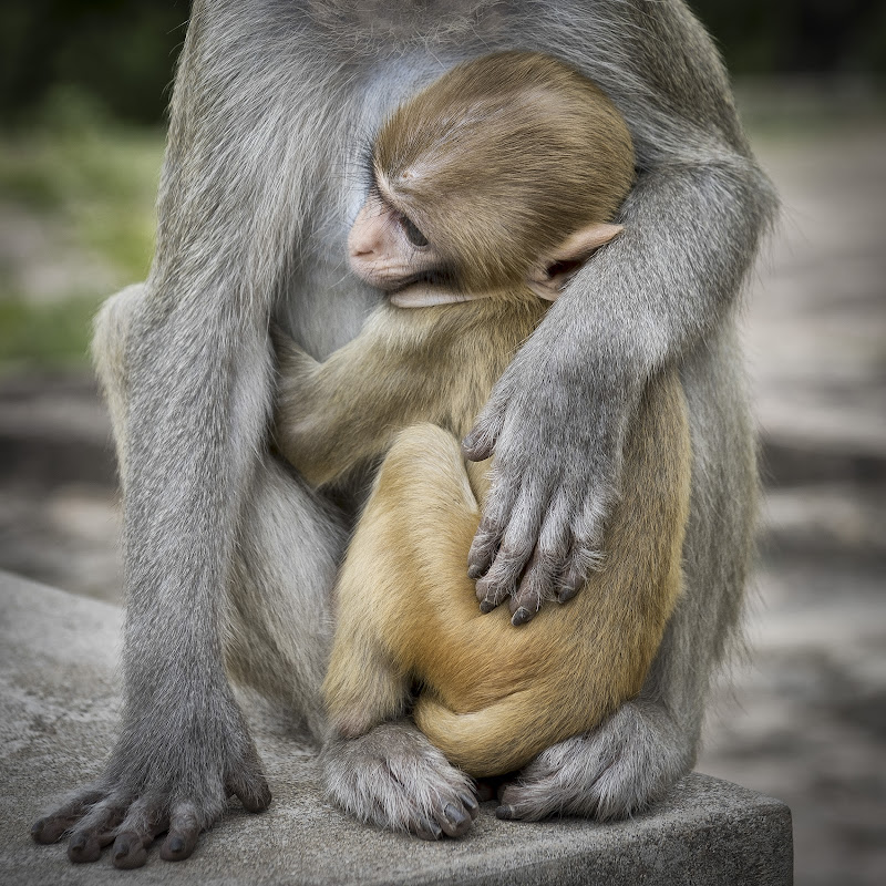 L'abbraccio di giuliobrega