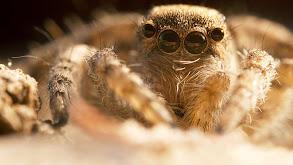 The Wild Web thumbnail
