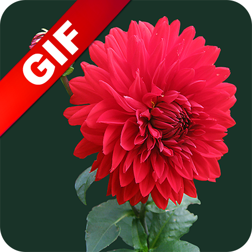 Flower GIF 2017