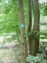 Photo: Exemple de fléchage à la bouillie bordelaise, écologique, exemple à suivre....