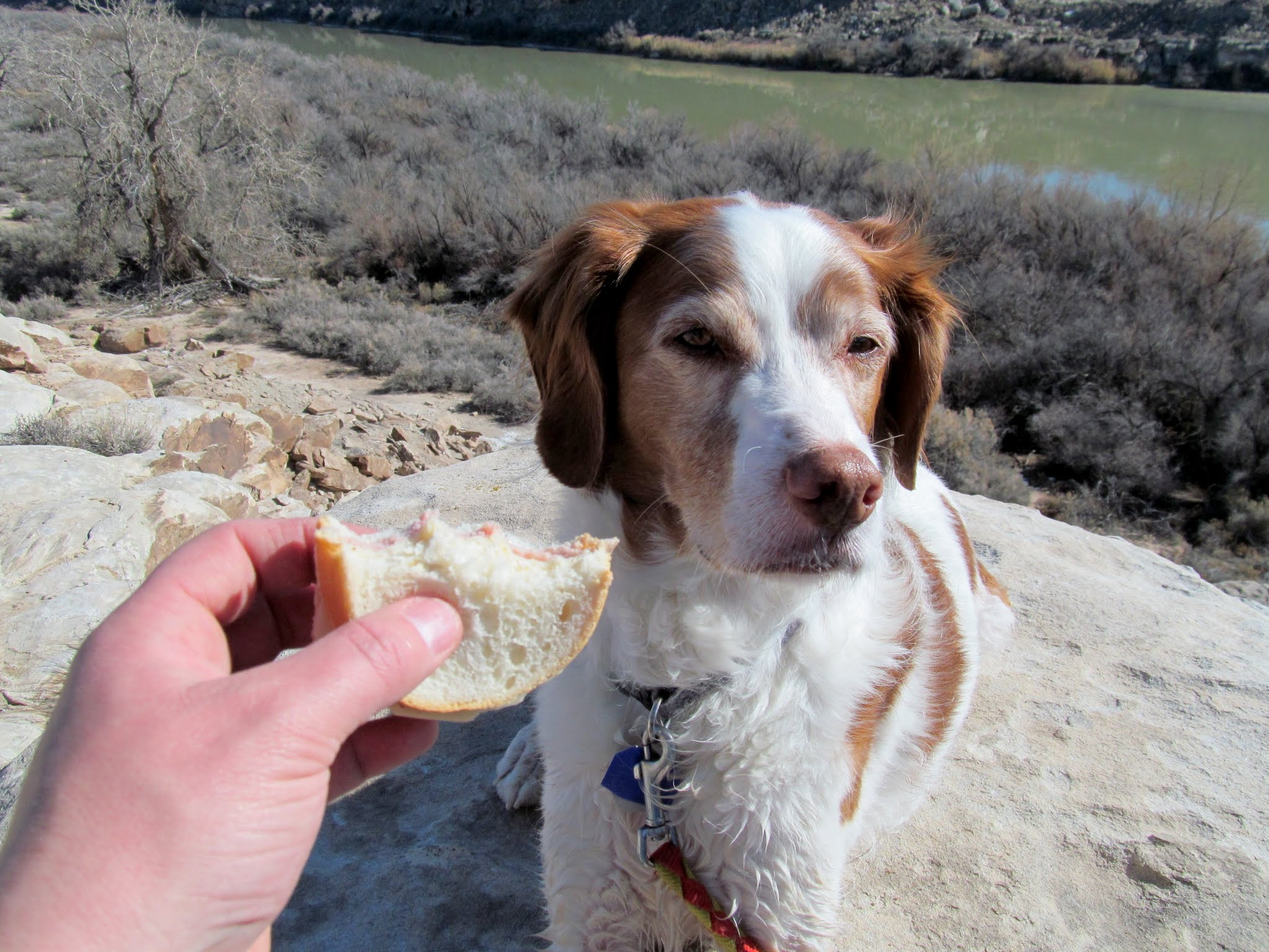 Photo: Torrey turning her nose up at my sandwich