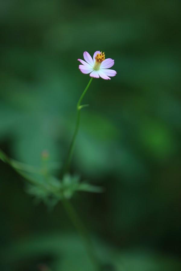 by Redzal Amzah - Nature Up Close Flowers - 2011-2013
