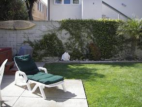Photo: Back yard