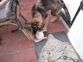 Photo: En Sinjo krijgt er maar geen genoeg van.......