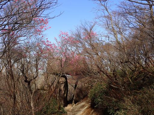 石門とアカヤシオ