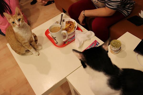 貓藝家,好多貓咪聚在一起的貓窩