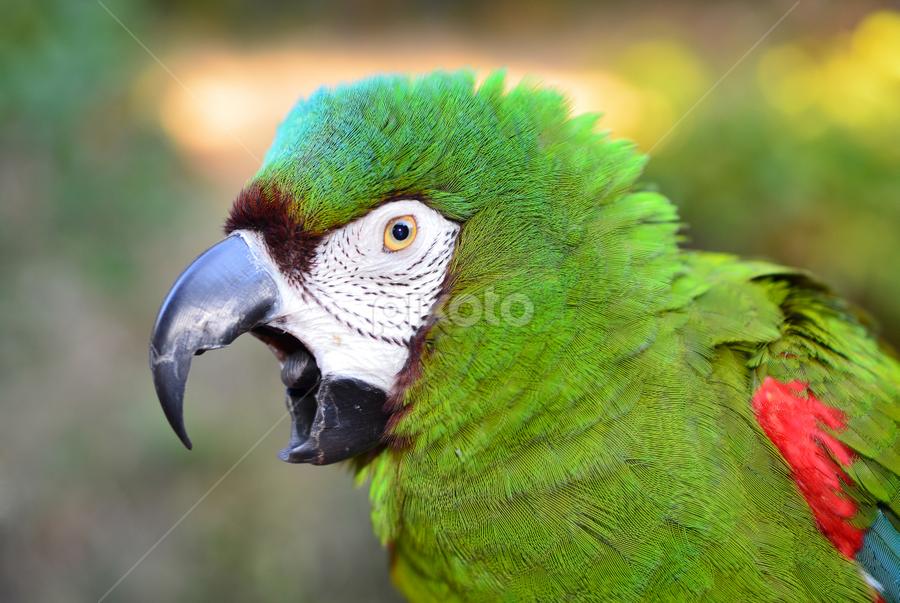 severe macaw birds animals