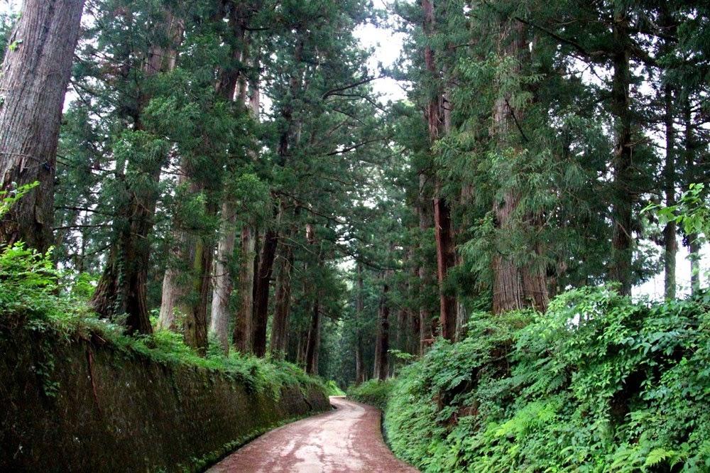 Cedar Avenue de Nikko, a avenida arborizada mais longa do mundo