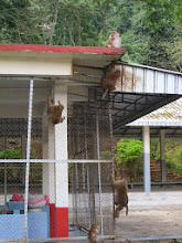 Photo: Even piggy can climb.
