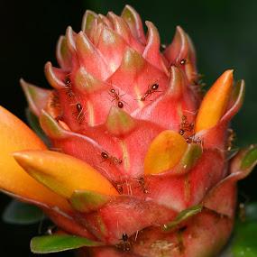 by Niney Azman - Nature Up Close Flowers - 2011-2013 ( taman seribu bunga )