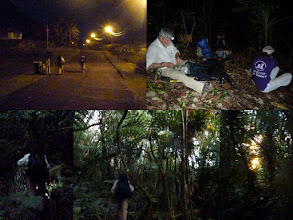 """Photo: Ta'u, AS - June 22, 2013 - [tl] 5am sees us walking to the start of the """"road""""/trail  [tr] Our first rest stop  [bl] Hiking by head lamp  [bc] The bottom part is mostly trees with little undergrowth  [br] Sunrise"""
