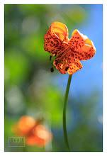 Photo: Eastern Sierras-20120716-434