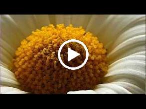 Video: A. Vivaldi  Turno Aricino (RV Anh. 125) - Aria  Se fide quanto belle (RV 749.32) -