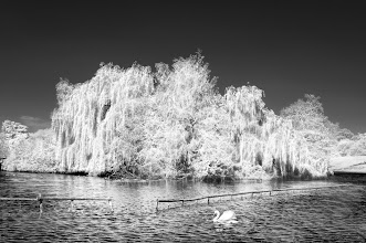 Photo: The Swan and The Lake (Clive Haynes)