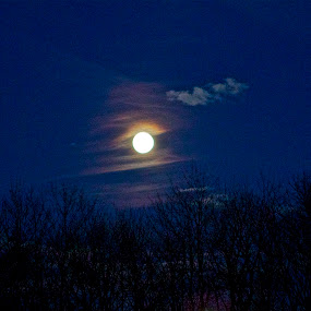 The Wolf Moon by Denise Zimmerman - Landscapes Starscapes ( clouds, moon, sky, blue, trees )