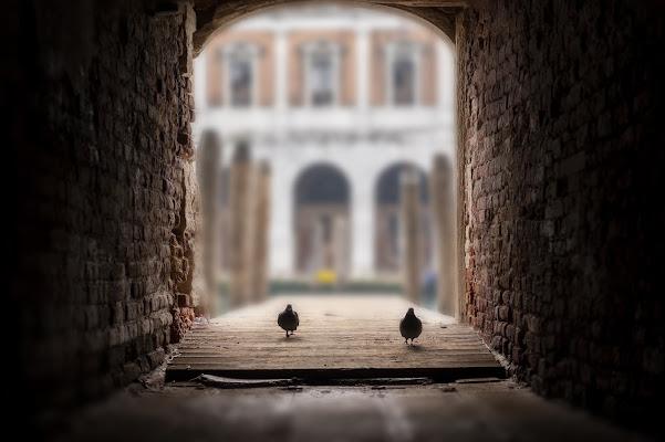 due piccioni con una fava