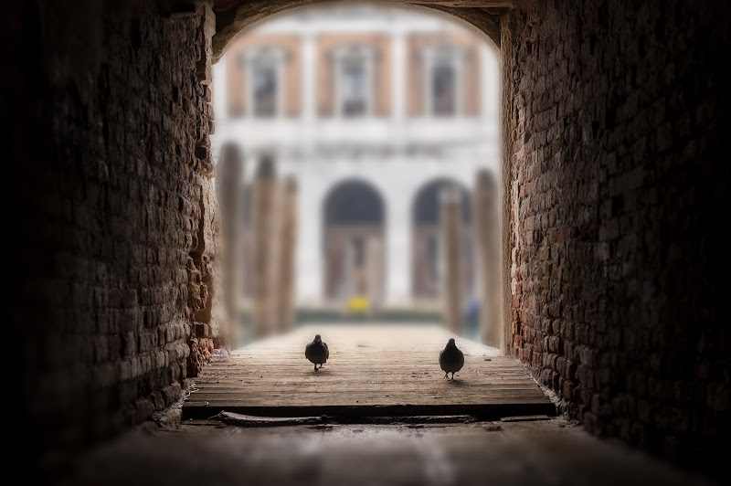 due piccioni con una fava di Giovi18