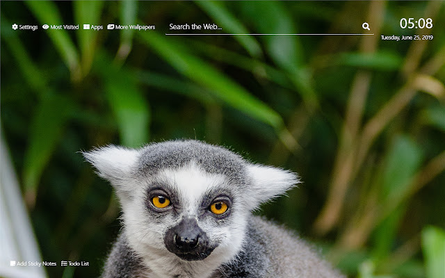 Lemur Wallpaper HD New Tab Theme©