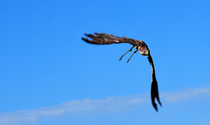 Libero di volare di Samvise65