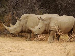 Photo: #004-Rhinocéros à Epako
