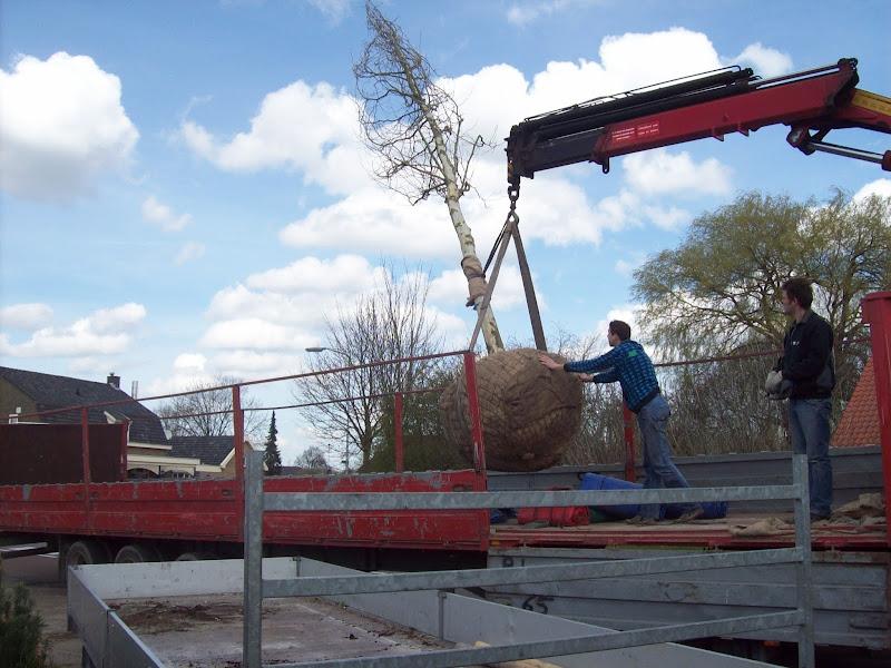 Photo: Het planten van een Platanus hispanica (plataan) door snijderboomverzorging, De boom is geleverd door kwekerij met vrachtwagen, daarna is de boom door een bedrijfspand heen vervoerd met een kraan, De boom is succesvol geplant. Ook is de kluit ondergronds verankerd met kluitanker.