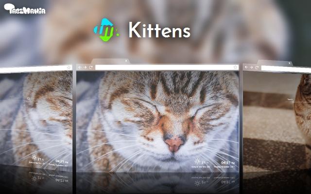 Kittens Wallpapers New Tab