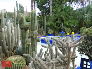 Photo: collection of cacti
